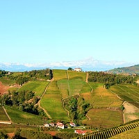 Barolo vineyard96-Point 纳帕 Merlot; Classic Barolos and Barbarescos