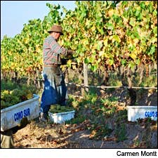 Photograph of vineyard workers courtesy of Cono Sur