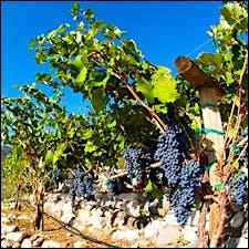 TH Arizona012210 225 Wine And Health In The News