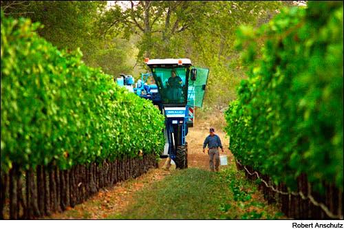 Harvest 101 The Basics Of Crush Season Wine Basics