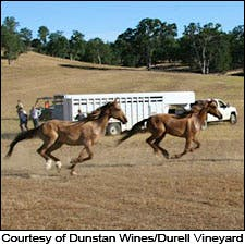 Courtesy of Dunstan Wines/Durell Vineyard