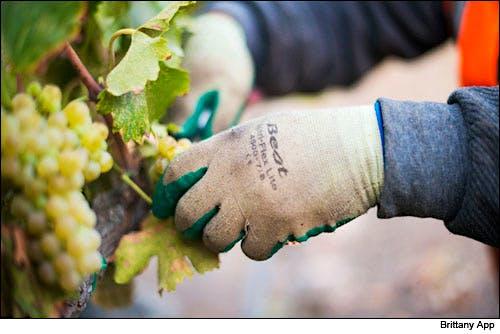 2014 Vintage Report: California Wine Harvest | Wine Spectator