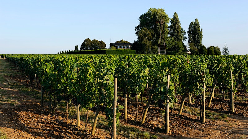 The 2014 Bordeaux Barrels Diary: Christian Moueix's Stable of Pomerols