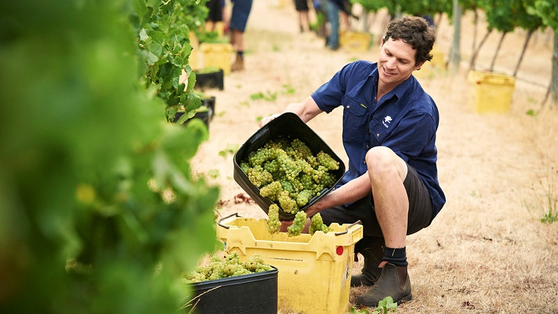 Vintage Preview 2015: Australian Wineries Report Outstanding Wines, Small Quantities