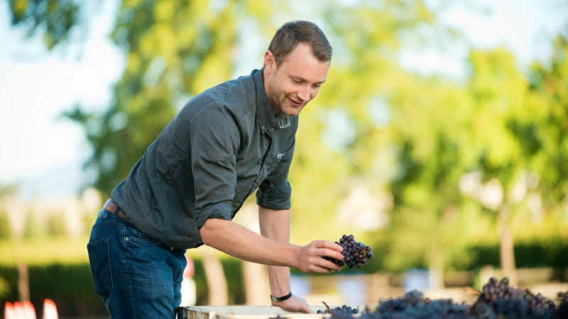 Wine Harvest 2015: Napa Valley Reports an Outstanding but Small Grape Crop