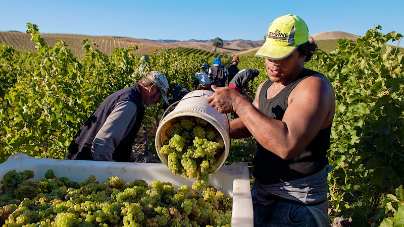 Vintage Preview 2015: New Zealand Wineries Report Promising Wines but Not Much Volume