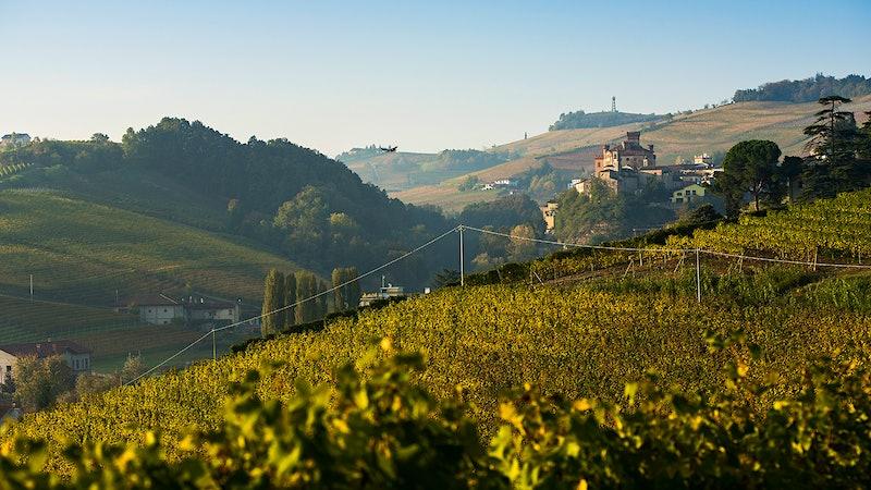 Wine Harvest 2015: Piedmont's Wineries Enjoy A Summer in the Sun