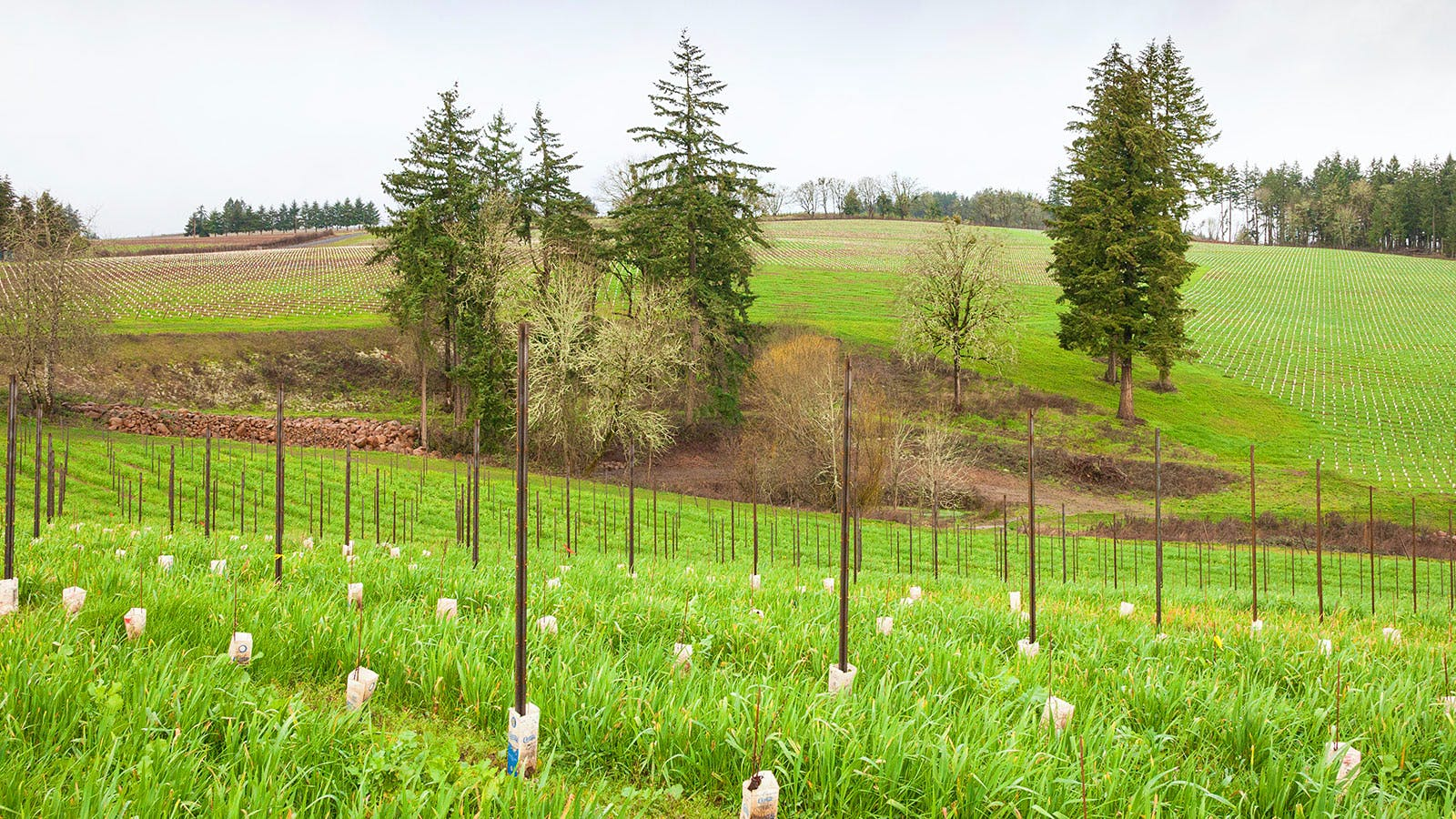 Larry Stone Returns to Oregon with New Vineyard and Winery