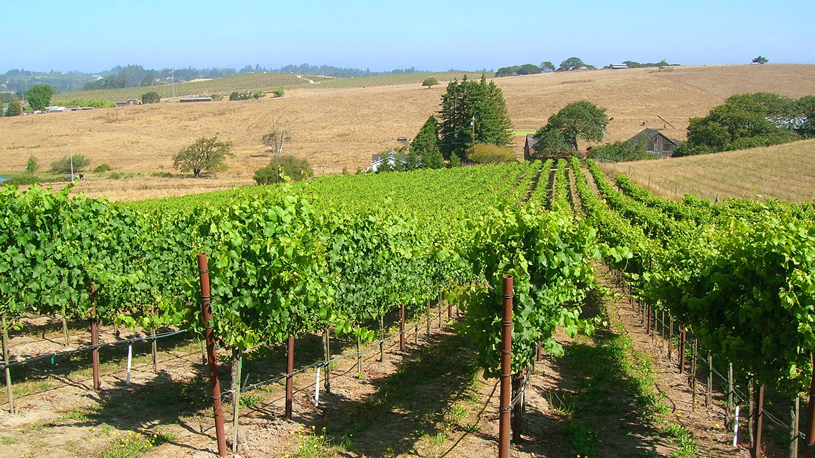 10 Distinctive California Pinot Noirs