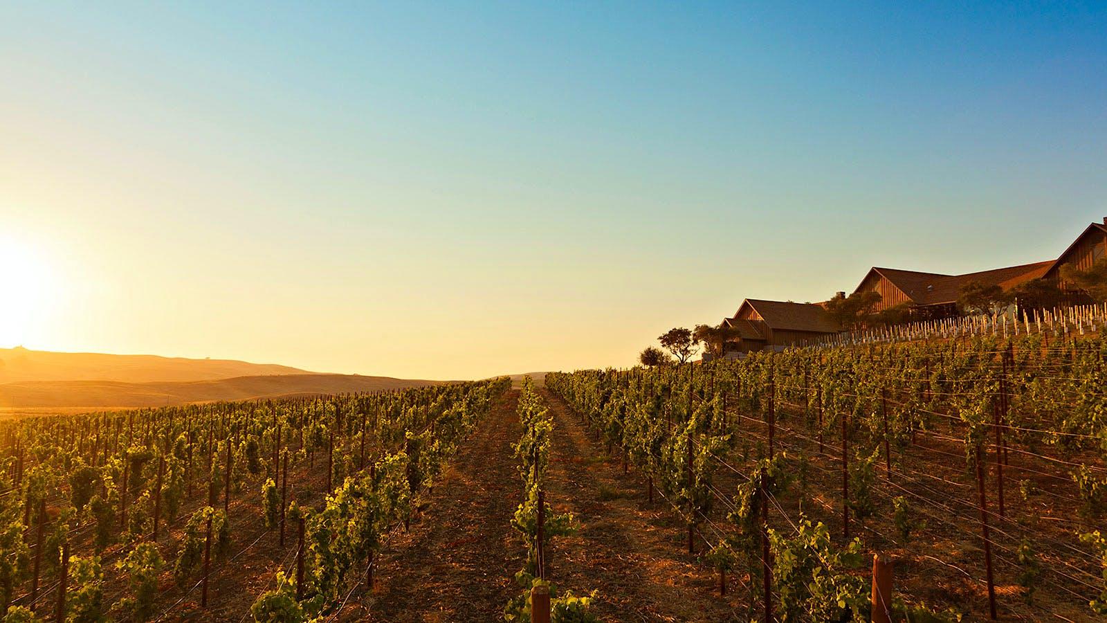 10 Stunning Sonoma Pinot Noirs