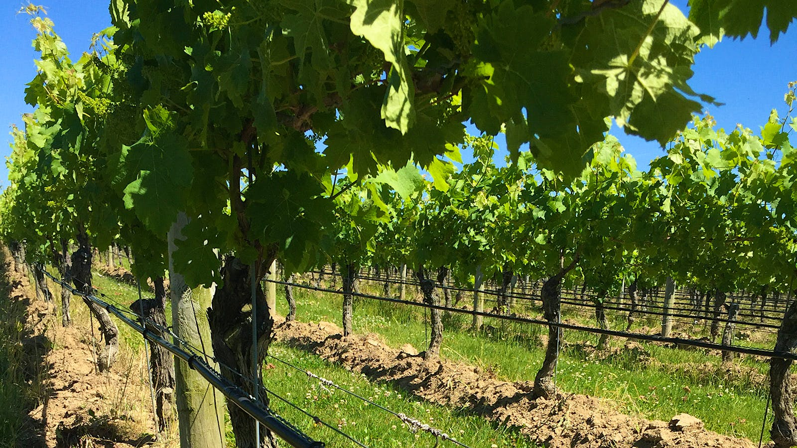 Clovis Point Carves Out Some Sharp Wines