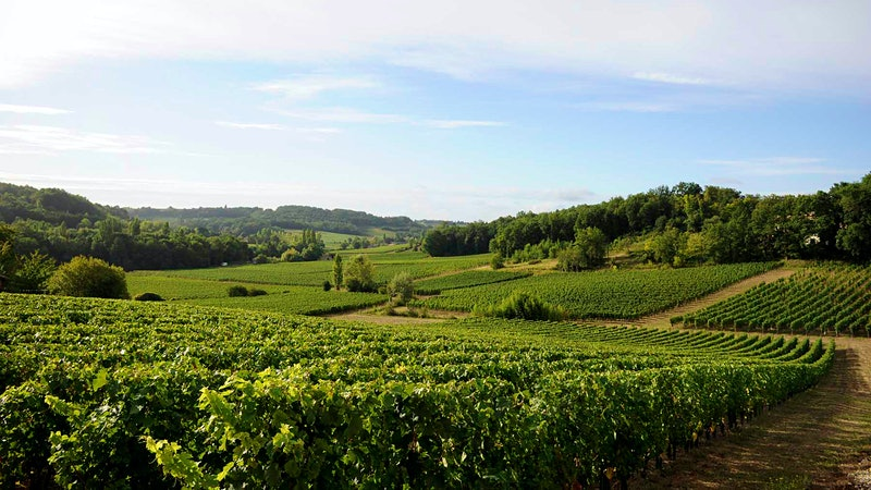 2015 Bordeaux Barrels Diary: Rebel Without a Pause