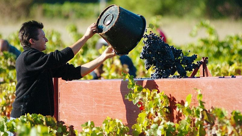 Wine Harvest Report 2016: Provence