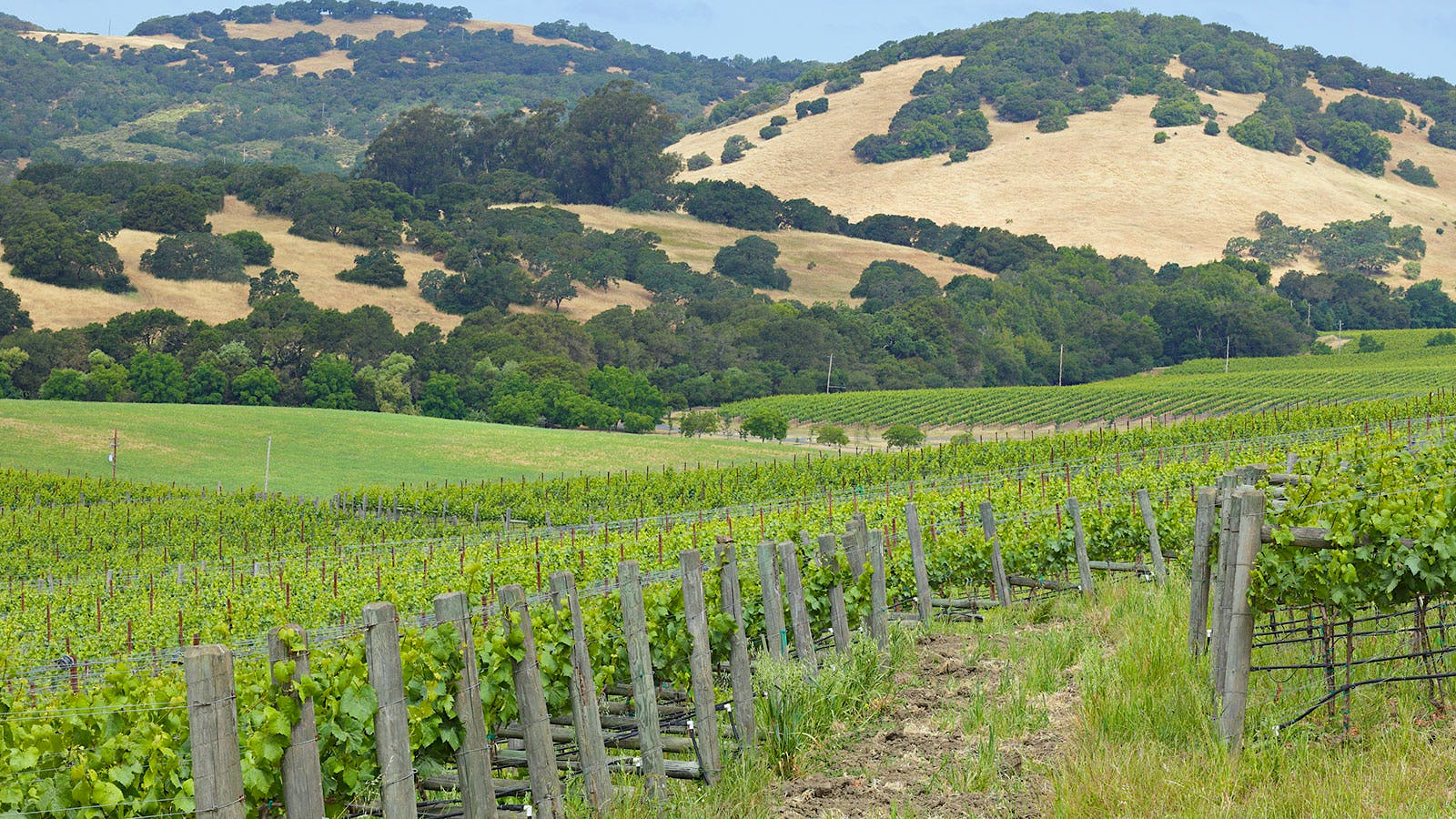 A Battle Over Vines and Trees in Napa Valley?