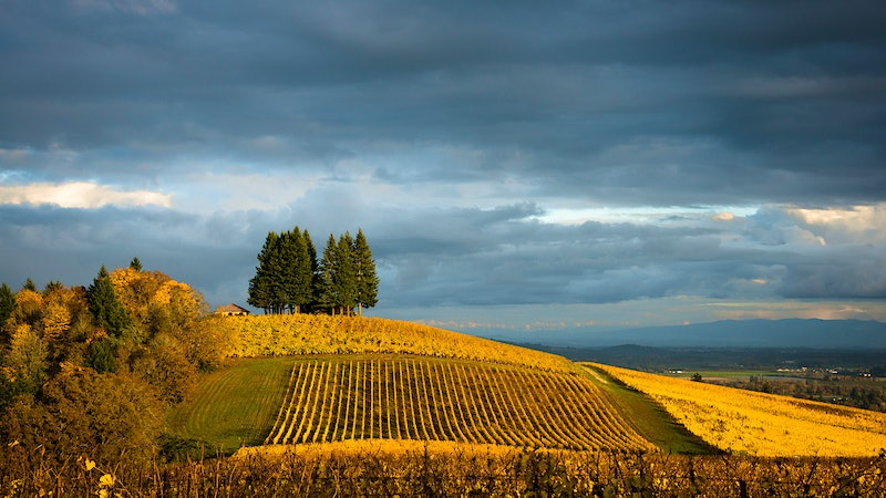 Wine Harvest Report 2016: Oregon Winemakers Feeling Relaxed and Happy