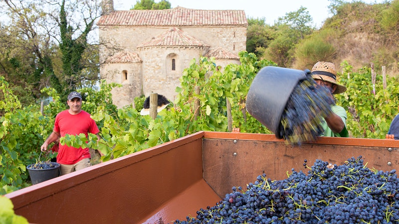 Wine Harvest Report 2016: A Year of Challenges and Rewards in the Rhône Valley