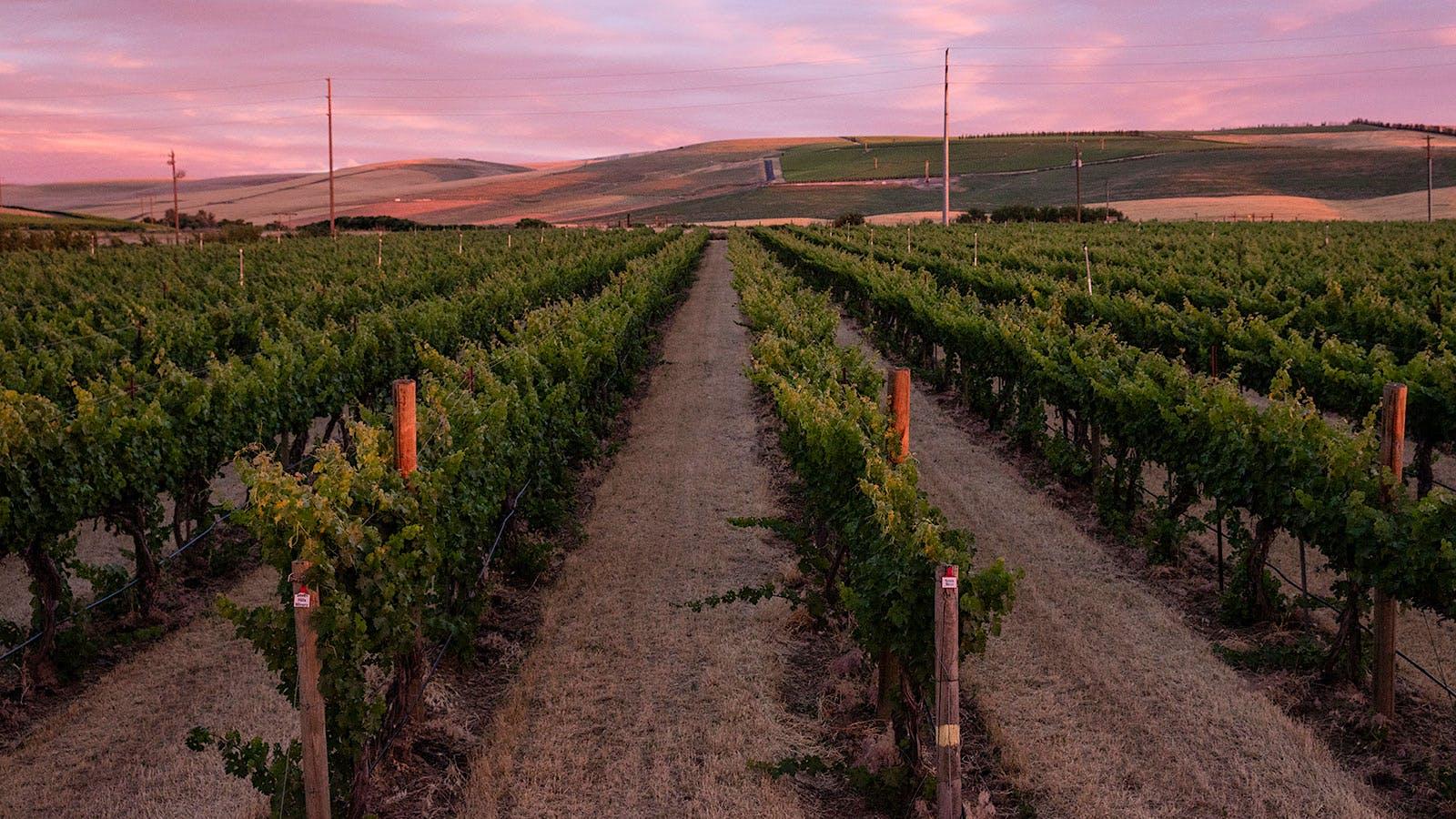 Crimson Wine Group Buys 66 Acres of Walla Walla Valley Vines