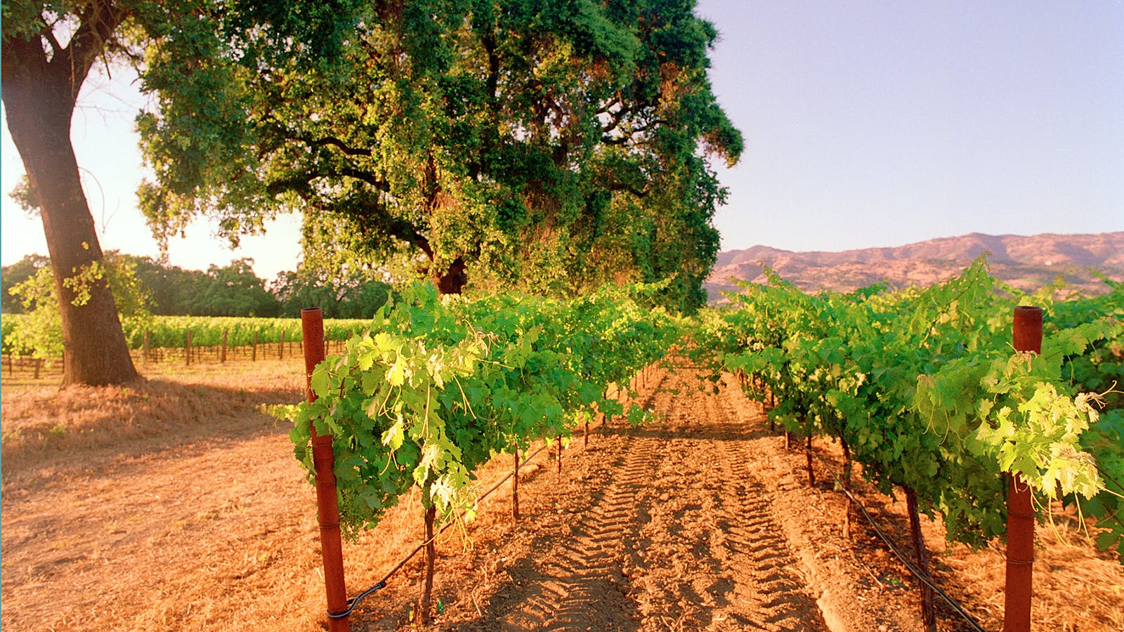 The Battle Over Napa's Hills Heads to Court