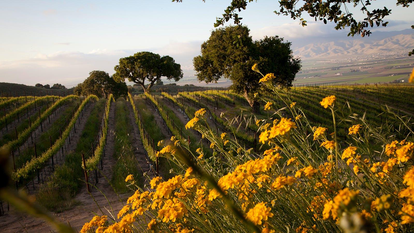8 Vivid California Pinot Noirs