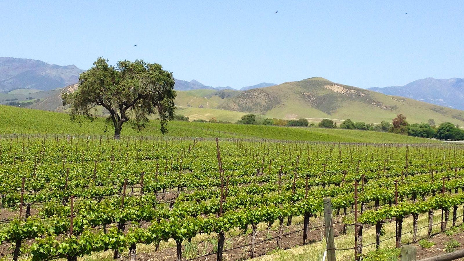 9 Juicy California Sauvignon Blancs
