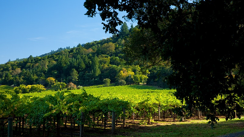 Raising a Glass to the Man Behind Napa's Martha's Vineyard