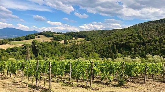 Exclusive: Falesco's Cotarella Family Buys Le Macioche in Montalcino