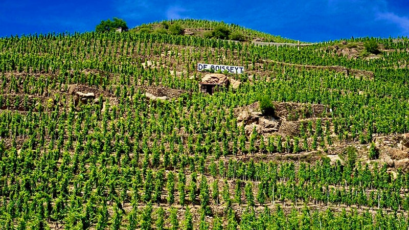 Winemaking Partners Purchase Côte-Rôtie's Domaine de Boisseyt-Chol and Its Côte Blonde Vines