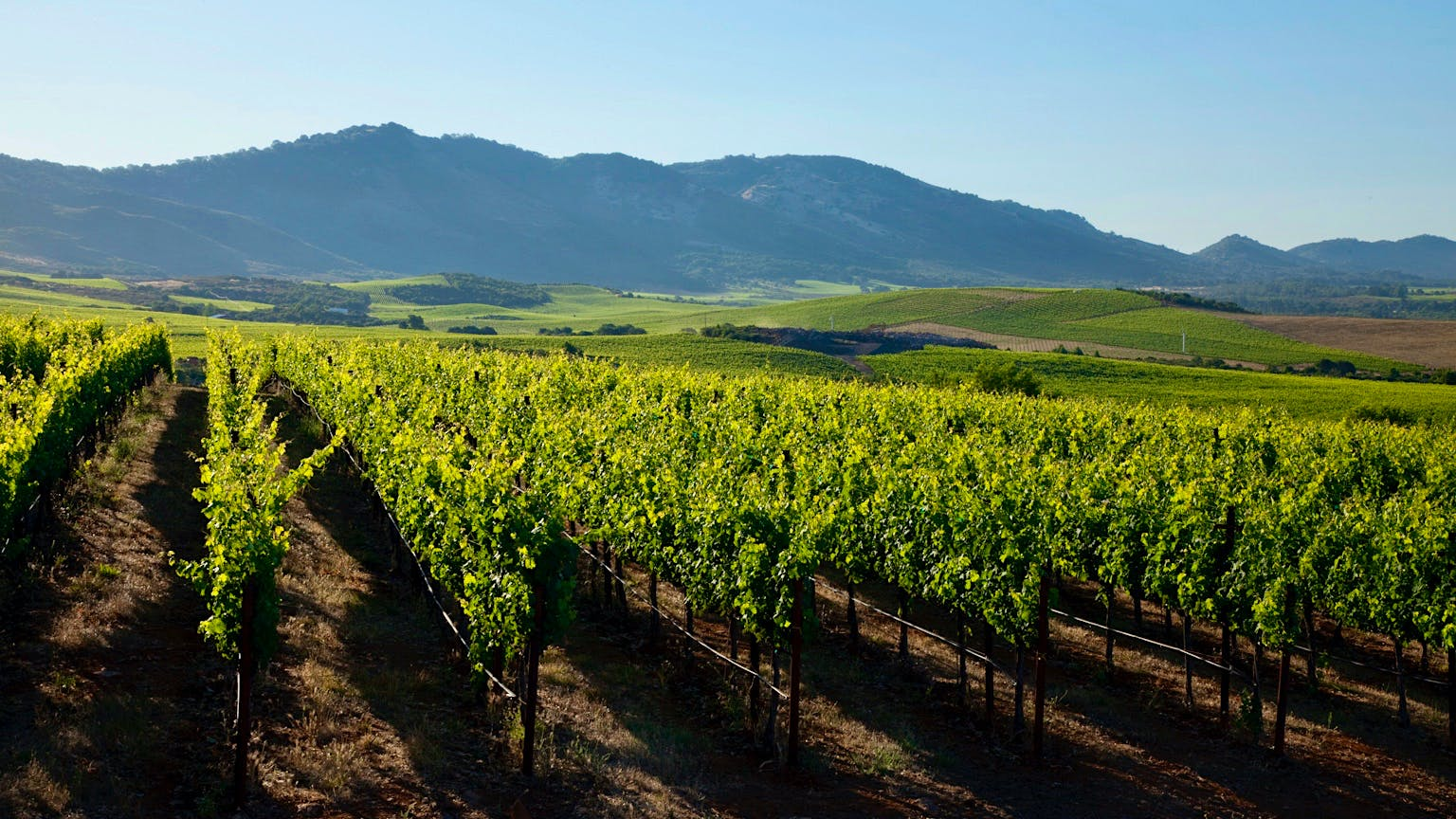 Exclusive: Gallo Buys Stagecoach Vineyard and its 600 Acres of Napa Valley Hillside Vines