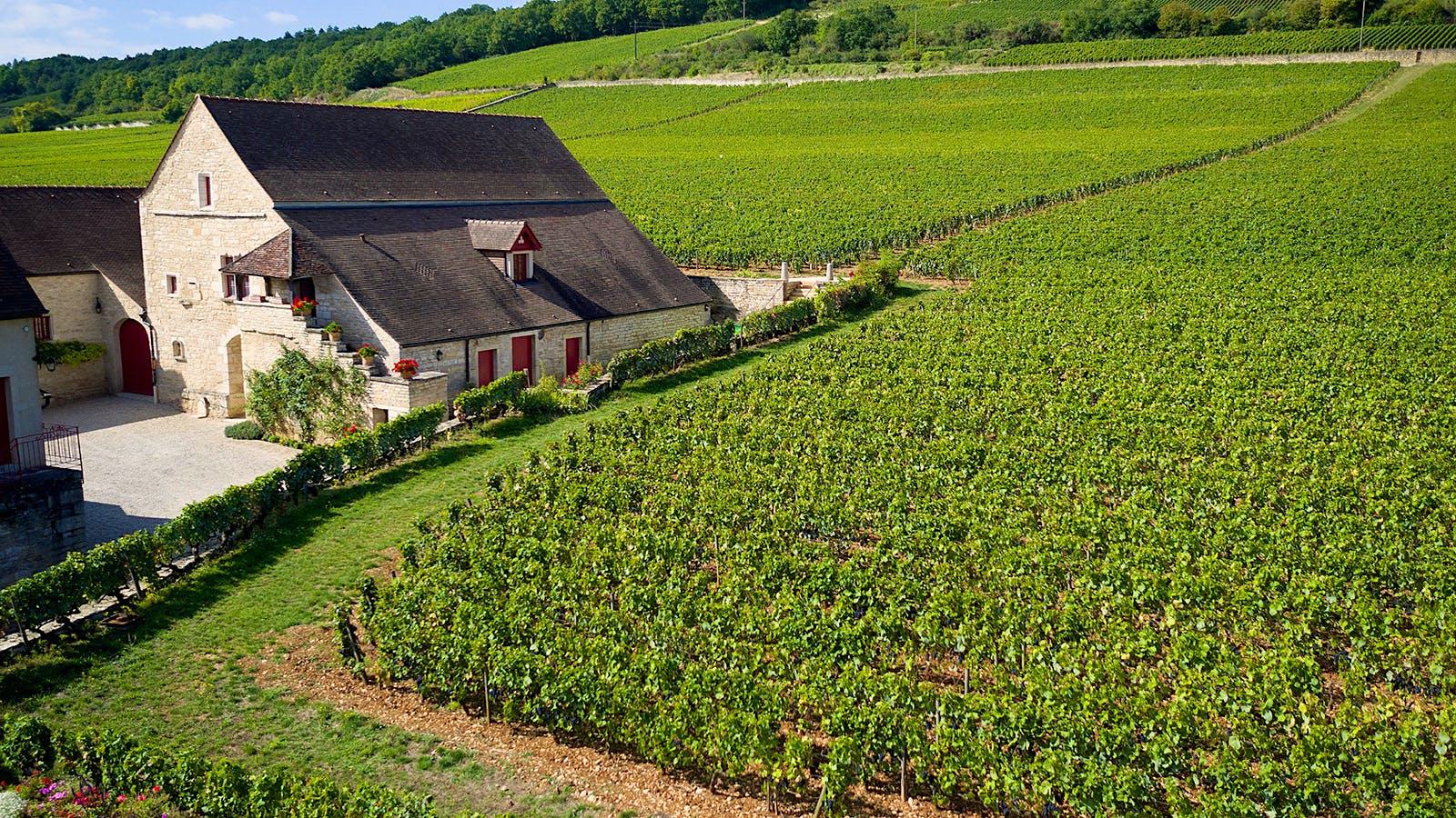 Château Latour Owner François Pinault Buys Burgundy Monopole Clos de Tart