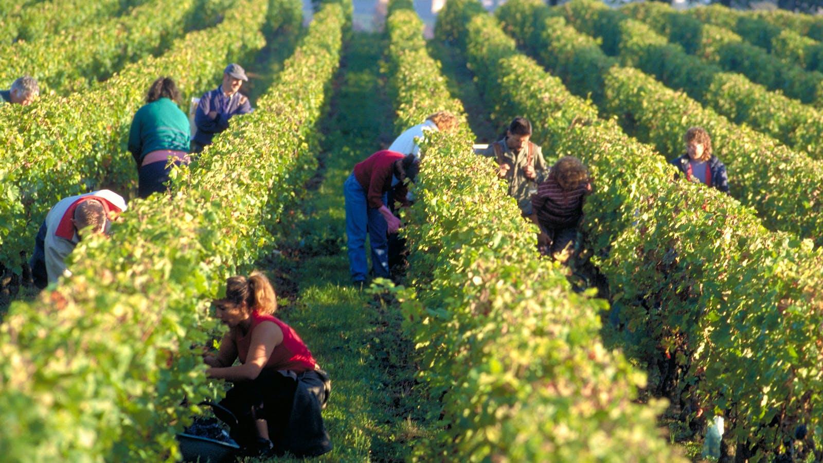Bordeaux's St.-Emilion Mandates Sustainable Viticulture