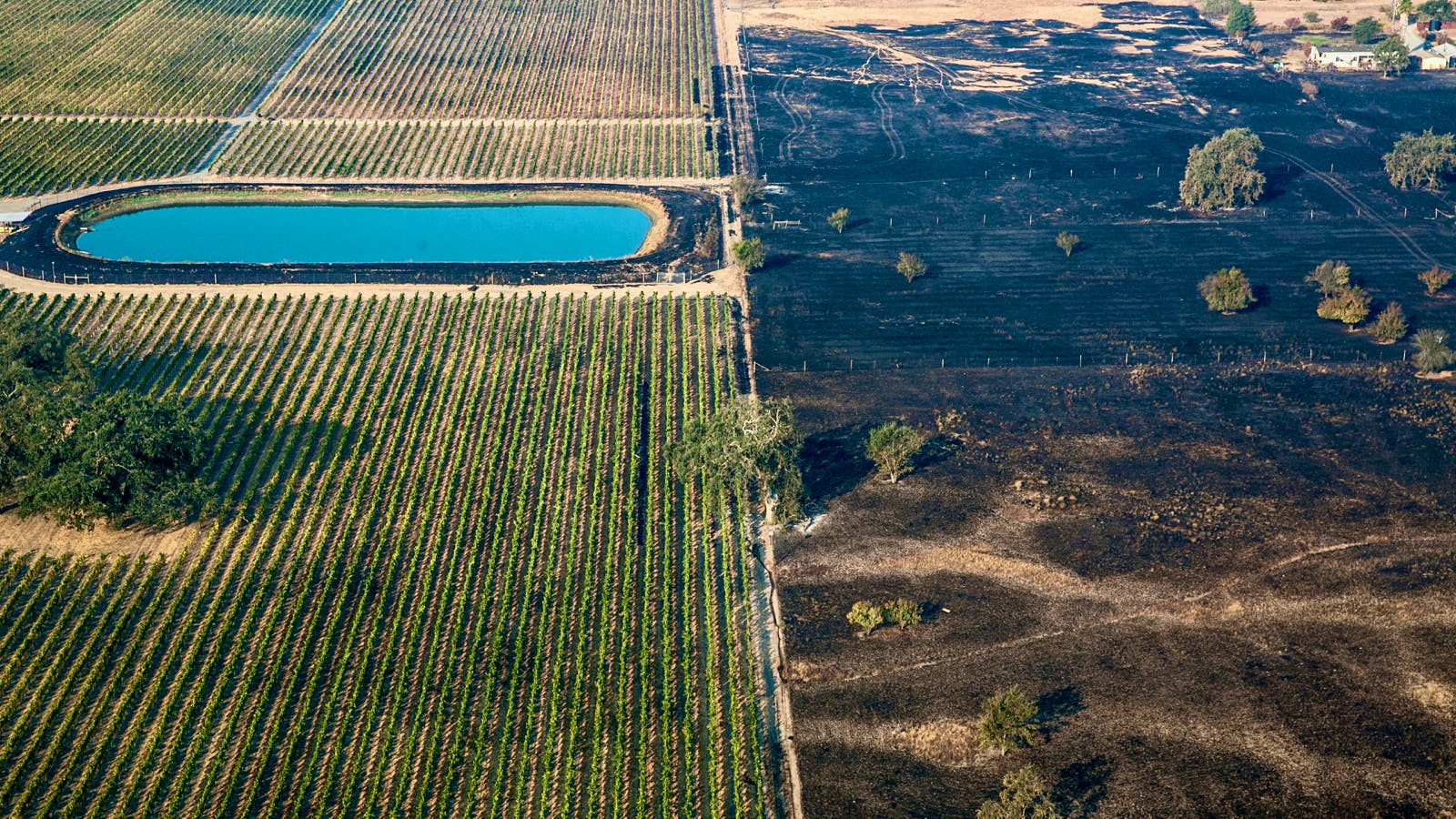 Northern California Wine-Country Wildfire Impact Study Shows Signs of Hope