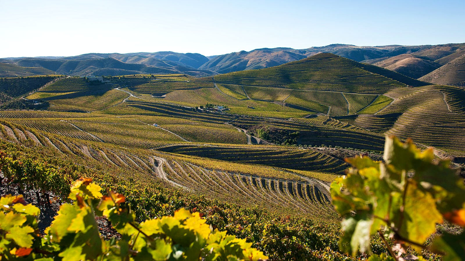 18 Discovery Wines from Portugal