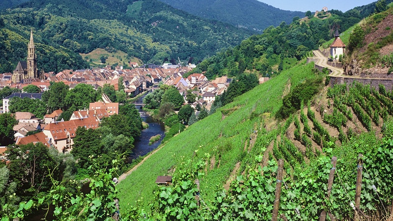 15 Crowd-Pleasing Alsace White Wines