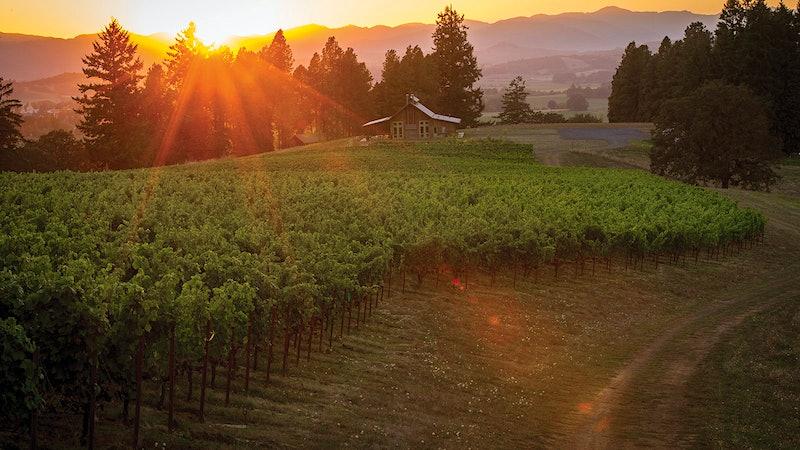 2008 Oregon Pinot Noir Retrospective: A Classic Vintage Revisited