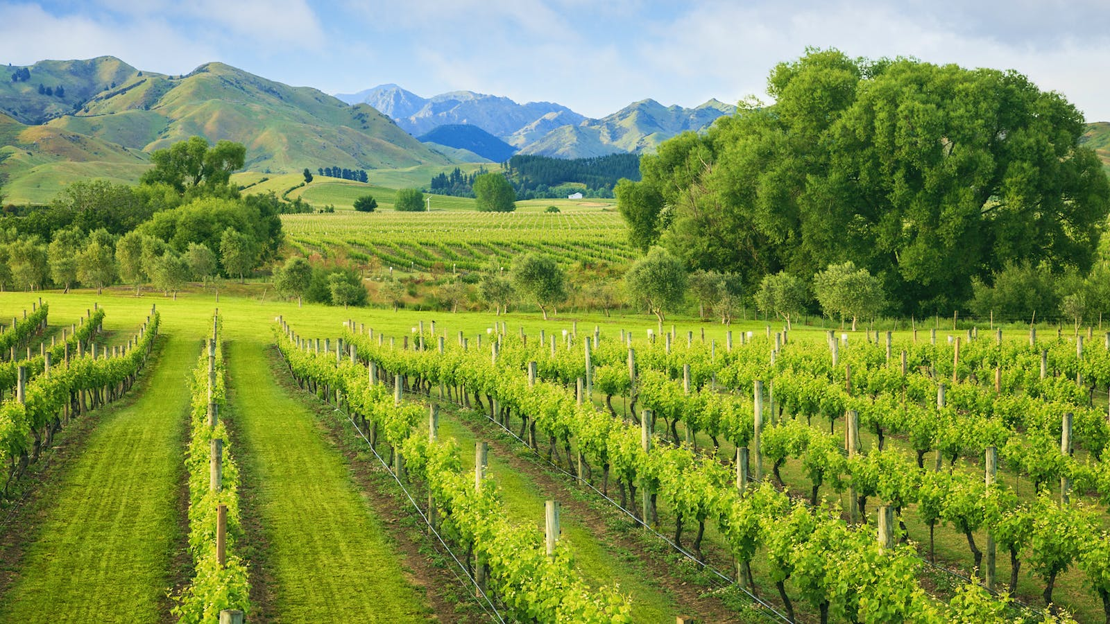 Marlborough Wineries Aim to Protect Reputation