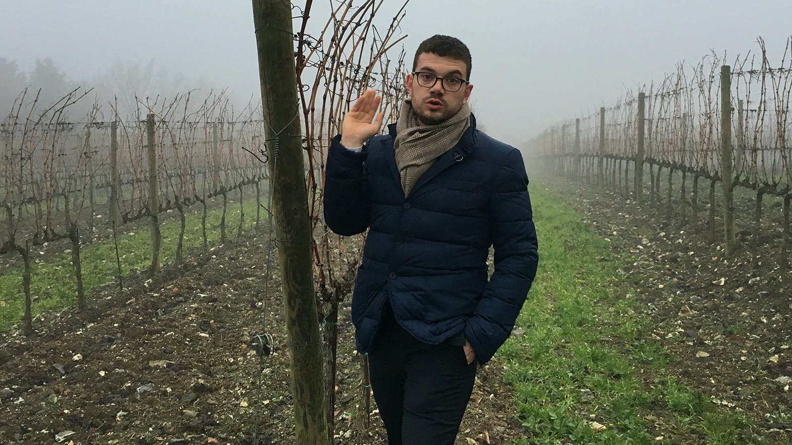 Brunello's Young Star
