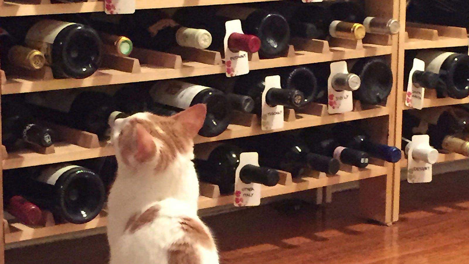 Sommelier Roundtable: Wine-Inspired Pet Names