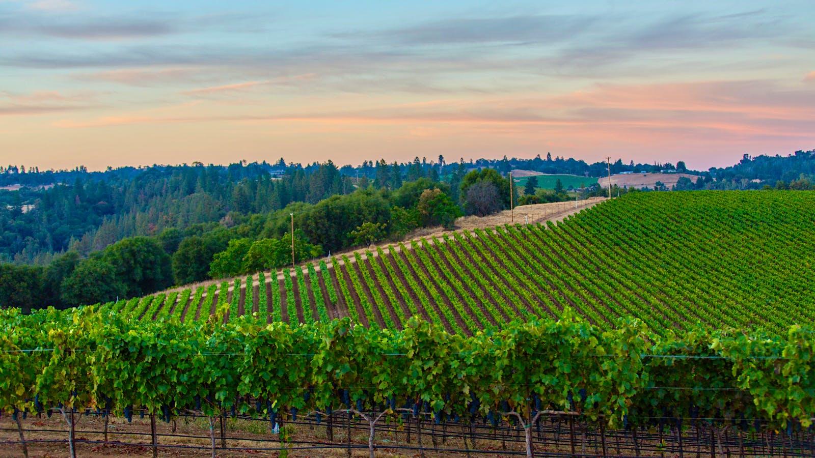 Exclusive: Rombauer Vineyards Buys Renwood's Winery in Amador County