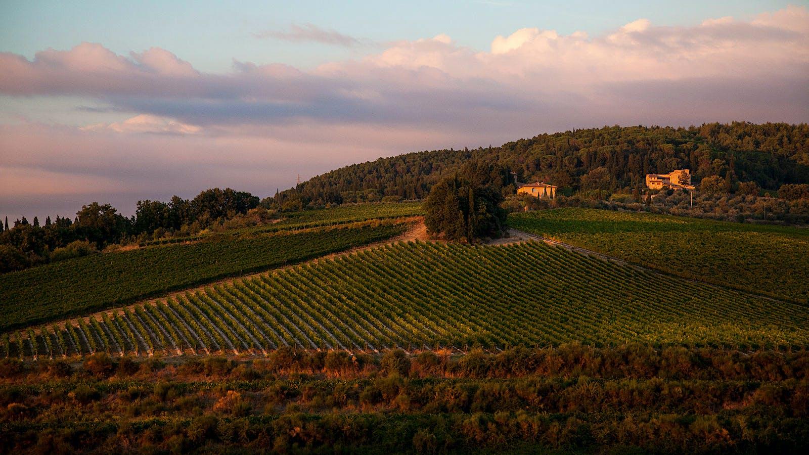 Italian Authorities Uncover Counterfeit Tignanello Wine Scheme