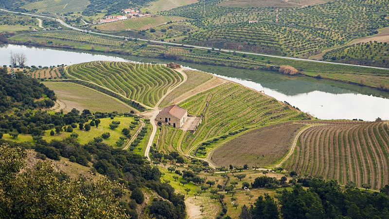 6 Fruit-Packed Douro Reds