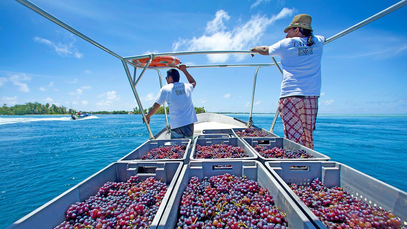 It's Harvesttime for Wine in … Tahiti?!