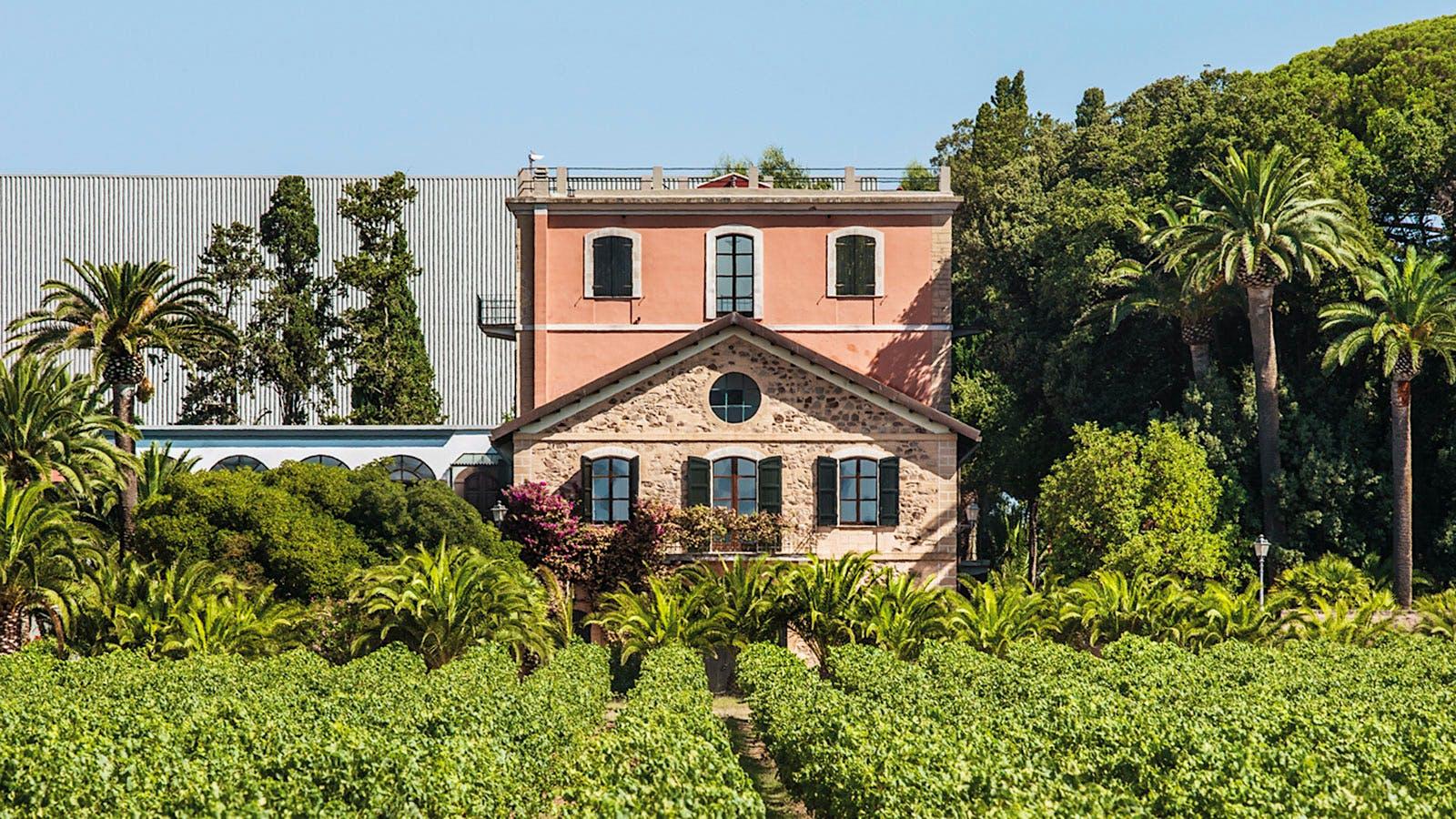 Wine Tip: Get to Know Sardinia's Sunny Wines