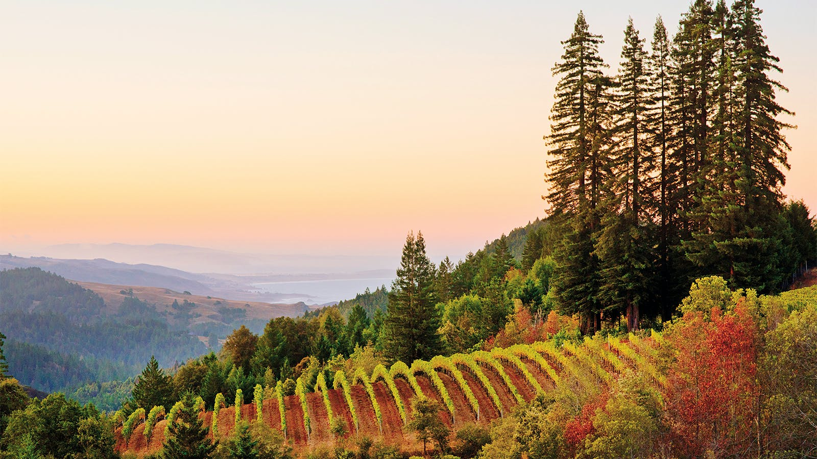 Wine Tip: Get to Know the True Sonoma Coast