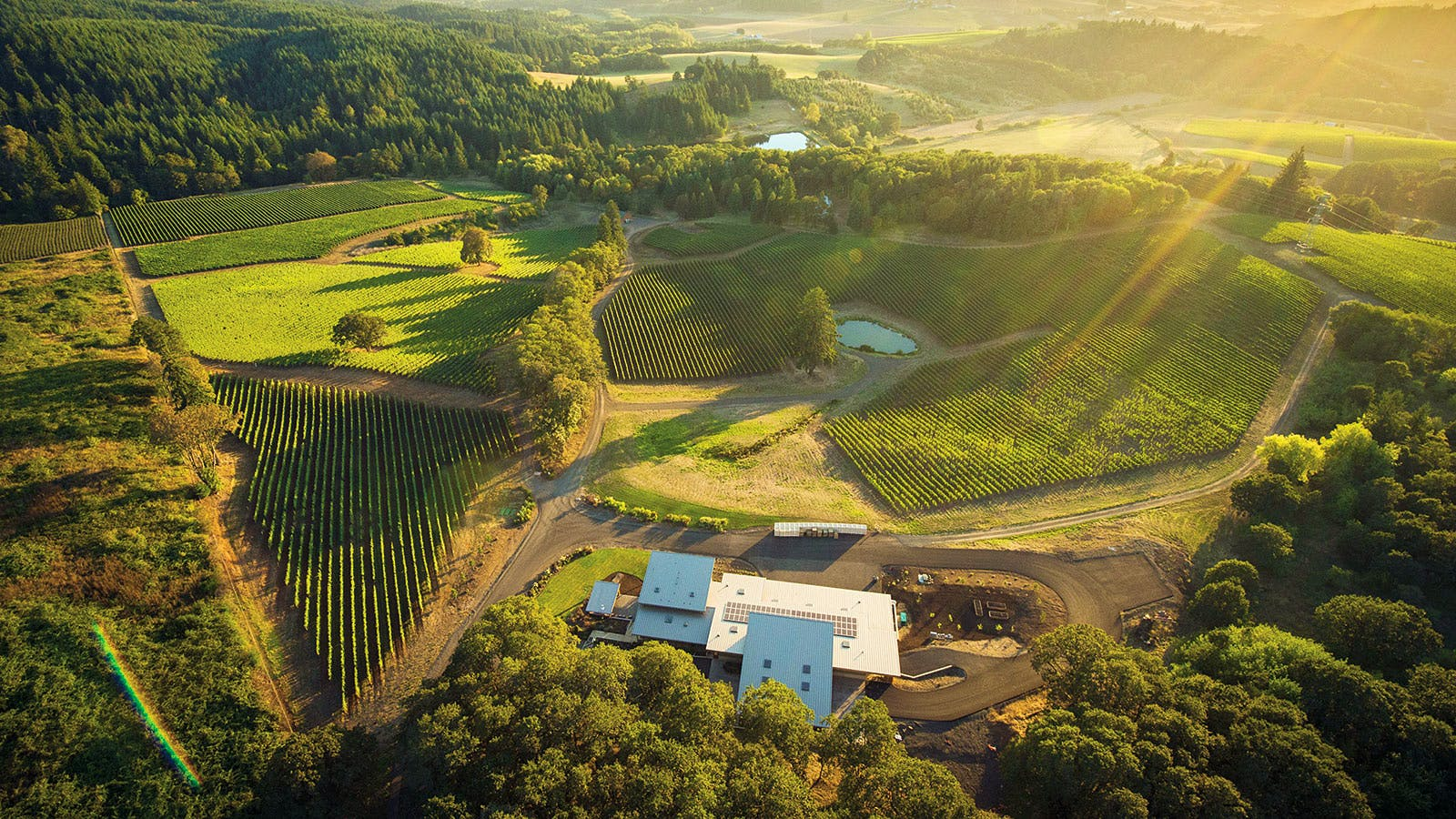 Wine Tip: Everything You Need to Know About Oregon