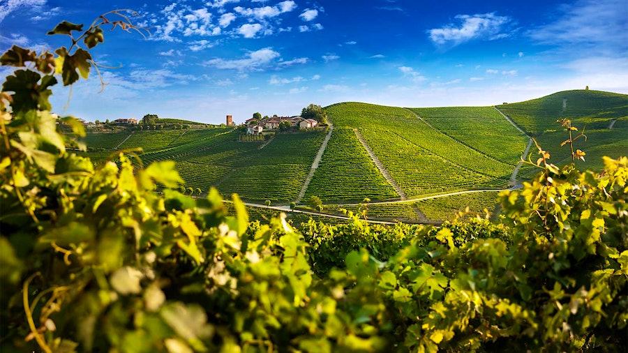 Asili vineyard in Barbaresco