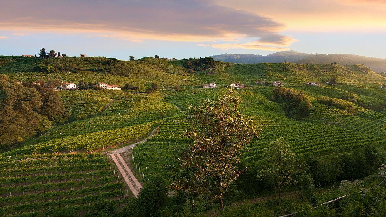 UNESCO Recognizes Prosecco Wine Areas as World Heritage Site