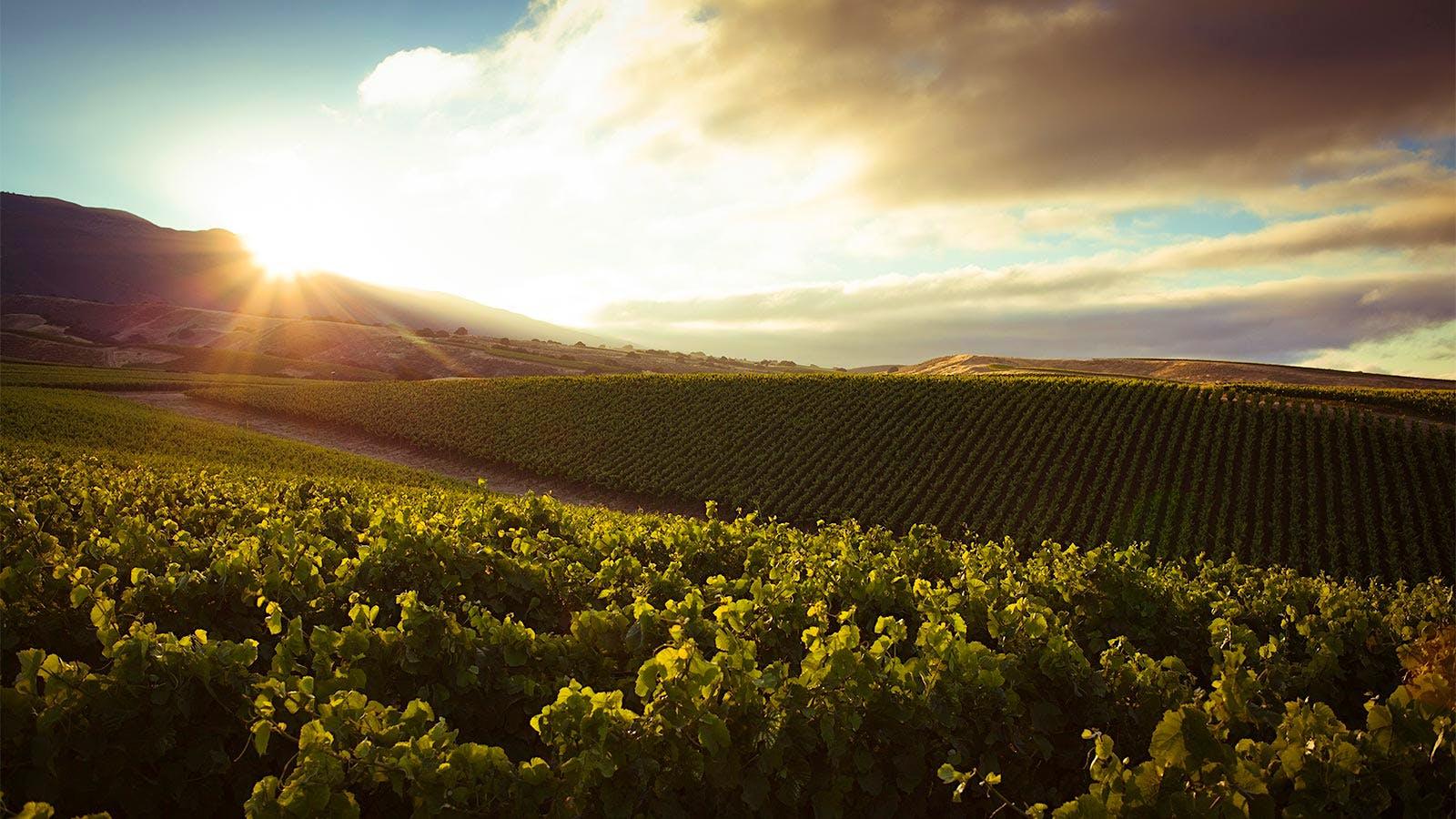 9 California Pinot Noir Bargains
