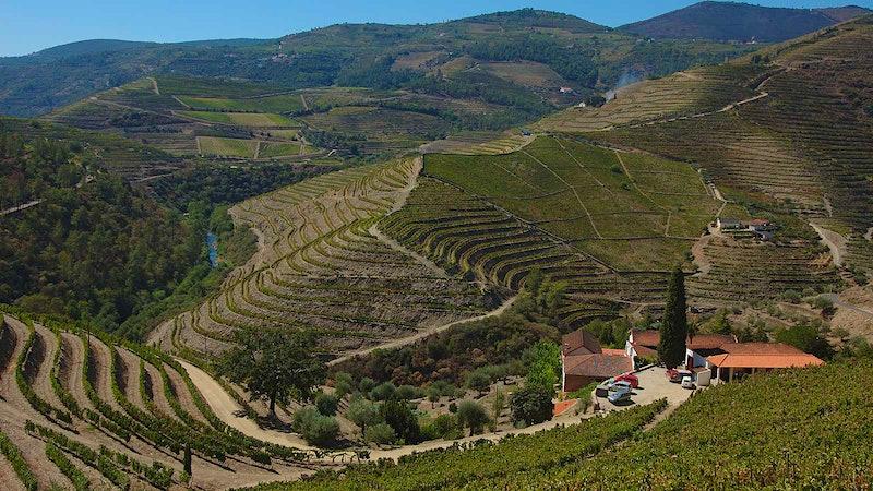 Douro Deal: Portugal's Quinta do Noval Buys Neighboring Wine Estate Quinta do Passadouro