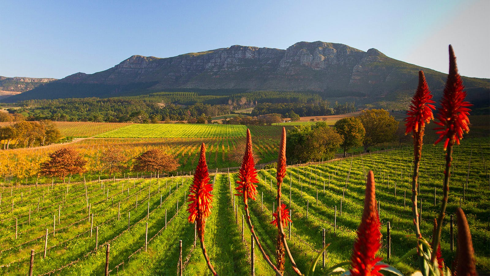 7 South African Wines to Grab Now at Under $20