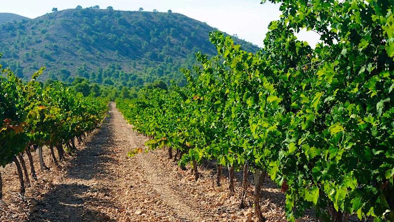 10 Spanish Reds that Look Beyond Rioja